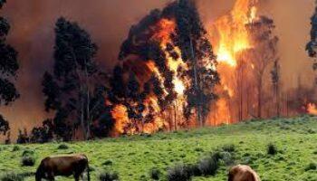 Consulta pública a la Orden que regulará las quemas controladas